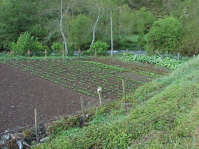 El huerto vivo for Asociacion de plantas en el huerto