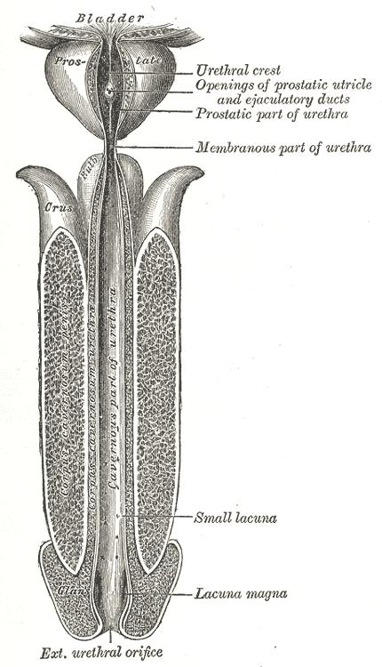como se cura el uretritis